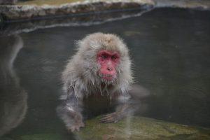 monkey-springs_edited