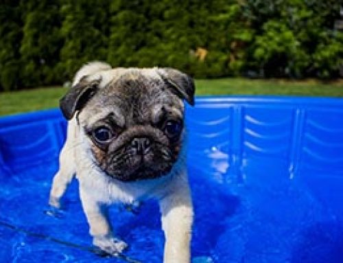 Are Hot Tubs Dog-Friendly?